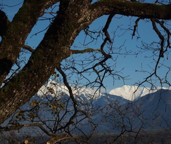 Ce beau chêne de Savoie n'est pas idéal pour la création de bols en bois!